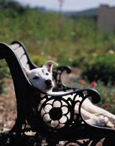 karenclevelandandtheanimalsdogbench