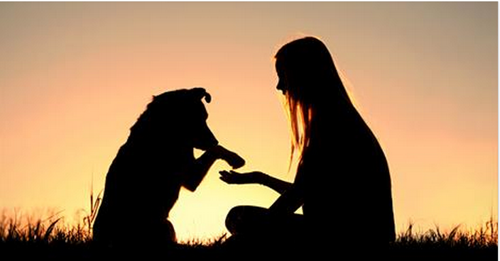 Prayer Support- For You and Your Animals   Karen Cleveland