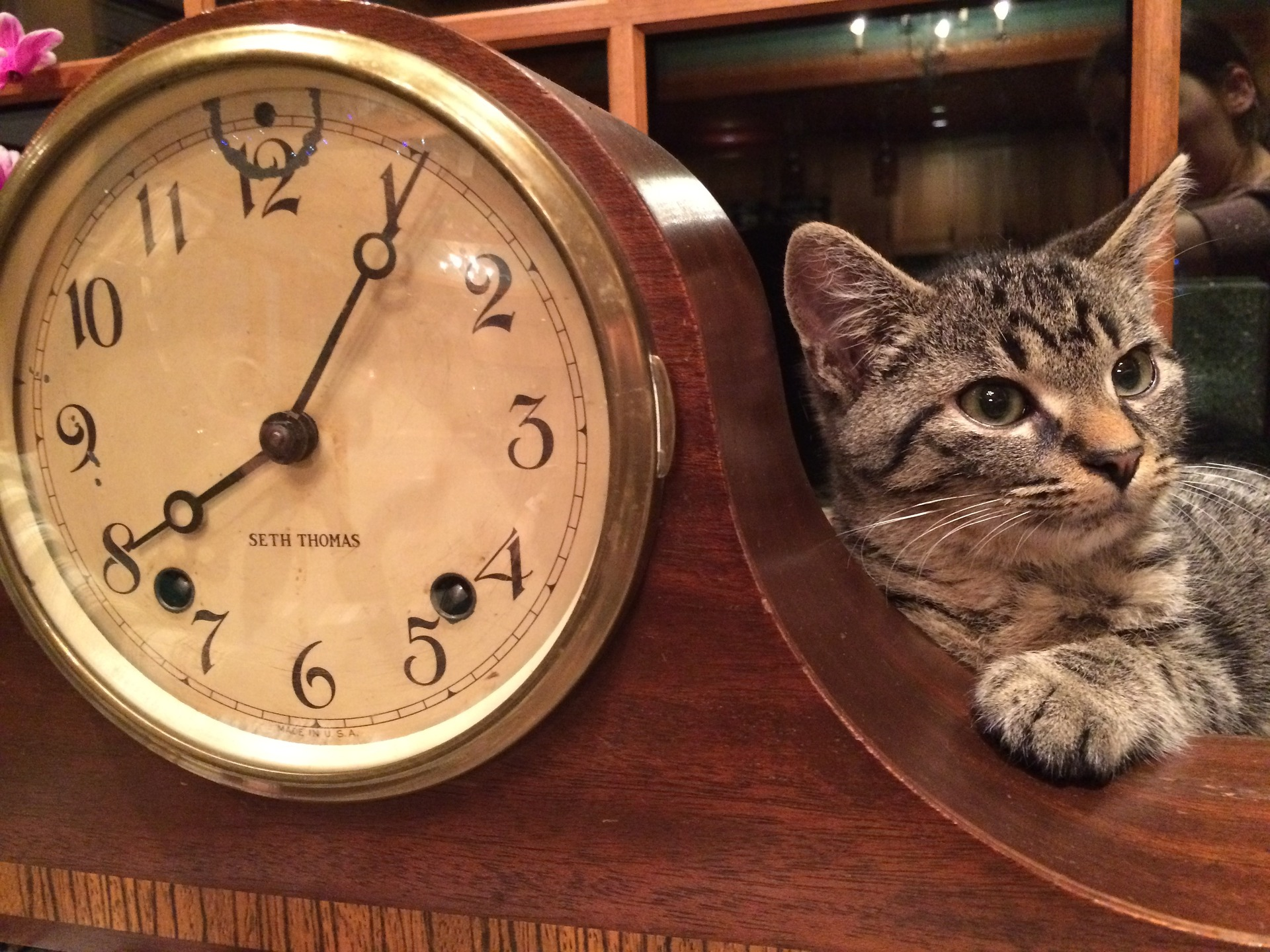 The Time of Our Lives – Teach Your Pets to Tell Time!