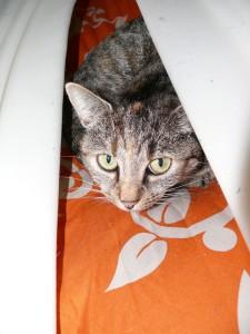 cat-196851_1920