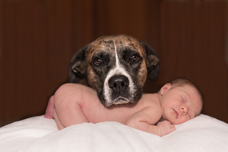 And Baby Makes…Four? Preparing Your Dog for the Baby