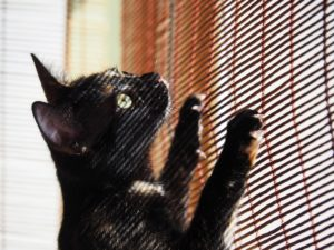 cat on window blinds